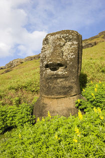 Moai by the quarry in the crater of Rano Raraku Volcano, Rapa Nui by Danita Delimont