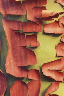 Madrona Trunk Detail, San Juan Island, WA von Danita Delimont