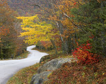 USA, Maine, Camden. Road leading through Camden Hills State Park. Credit as by Danita Delimont