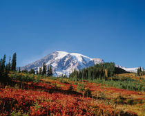 Fall colors in the schrubs at Paradise with Mt. Rainier in the background von Danita Delimont