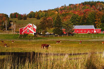 Vermont farm in the fall. USA, Vermont. RELEASE AVAILABLE. von Danita Delimont