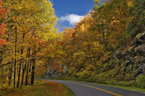 Blue Ridge Parkway curving through autumn colors near Grandfather Mountain von Danita Delimont