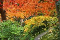 Okochi Sanso, Arashiyama, Kyoto, Japan by Danita Delimont