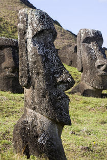 Moais by the quarry on the outer slope of the Rano Raraku Volcano, Rapa Nui by Danita Delimont