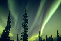 USA, Fairbanks area, Central Alaska by Danita Delimont