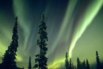 USA, Fairbanks area, Central Alaska von Danita Delimont