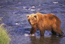 North America, USA, Alaska by Danita Delimont