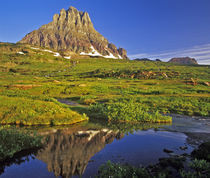 Mt Clements reflects into small pool at Logan Pass in National Park, Montana von Danita Delimont