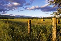 Hay Bales near Whitefish Montana by Danita Delimont