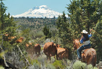 Cowboy,Central Oregon,USA von Danita Delimont