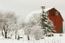 North America, USA, WA, Whidbey Island.  Festive red barn in fresh snow by Danita Delimont