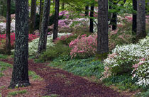 USA, Georgia, Callaway Gardens by Danita Delimont