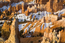 Hoodoos at Sunrise Point in Bryce Canyon National Park in Utah by Danita Delimont