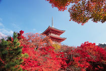 Asia, Japan, Kyoto. Autumn Colour von Danita Delimont