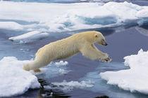 Arctic,Svalbard,Polar Bear by Danita Delimont