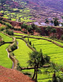 Asia, China, Yunnan, Honghe.  Rice terraces near Jiayin Village. von Danita Delimont