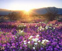 USA, California, Anza-Borrego Desert State Park von Danita Delimont