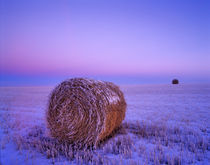 Winter Straw Bales near Cartwright North Dakota by Danita Delimont