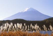 Asia, Japan, Yamanashi, Kawaguchi Lake Mt. Fuji with Susuki Grass by Danita Delimont