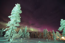 The Aurora borealis is a phenomenon of light by Danita Delimont