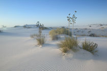 USA-NEW MEXICO- White Sands National Monument by Danita Delimont