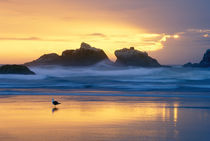 USA, Oregon, Bandon, Beach at sunset with sea stacks and gull. Credit as von Danita Delimont