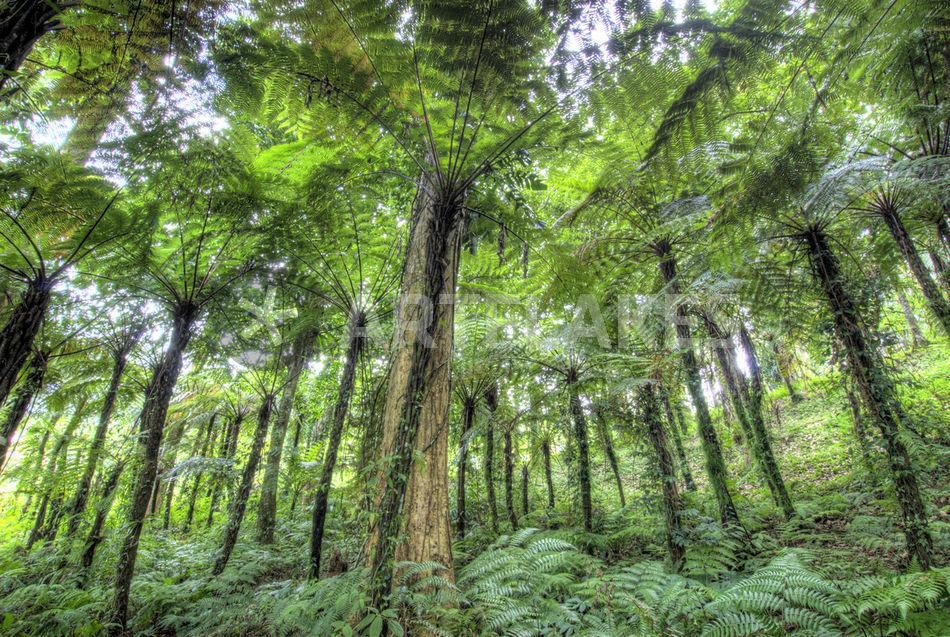Plants amp Animals  Tropical Rainforest Biome