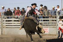 Bull Riding at North American Indian Days in Browning, Montana von Danita Delimont