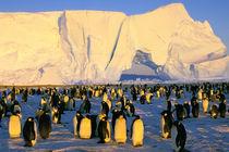 Antarctica, Antarctic Peninsula, Weddell Sea von Danita Delimont