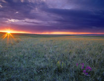 Prairie Sunset near Culbertson Montana by Danita Delimont