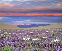 USA, California, Dumont Dunes von Danita Delimont
