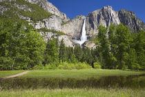 CA, Yosemite NP, Upper Yosemite Falls von Danita Delimont