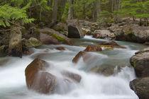 Avalanche Creek in Glacier National Park in Montana von Danita Delimont