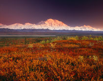 USA, Alaska, Denali NP, Sunset light on Mt McKinley von Danita Delimont