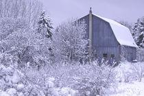 USA, Michigan,Rochester Hills Snowy blue barn, snow, farm, barn von Danita Delimont