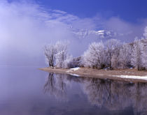 Rimed trees and reflection, Mt. Timpanogas above the clouds, Utah. von Danita Delimont