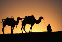 Silhouette of camel caravan on the desert at dawn, Dunhuang, Gansu Province by Danita Delimont