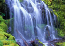 Spring-time fresh water flowing over moss carpeted rocks Proxy Falls by Danita Delimont