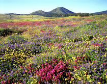 USA, California, Cuyamaca Rancho State Park von Danita Delimont