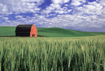 Red barn in wheat & barley field in Whitman County, Washington state  PR von Danita Delimont