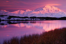 Mt. Denali at sunset from Reflection Pond von Danita Delimont