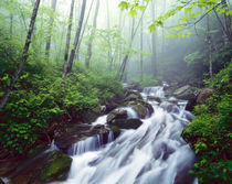 Linn Cove Creek cascading through foggy forest by Danita Delimont