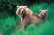 USA, Alaska, Katmai National Park von Danita Delimont