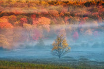 USA, West Virginia, Davis. Misty valley and forest in autumn colors. Credit as by Danita Delimont