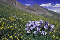 Mountains and wildflowers in alpine meadow by Danita Delimont