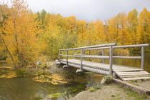 WA, Wenatchee NF, near Easton, Autumn color at Easton Ponds with trail von Danita Delimont