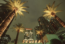 U.S.A., California, Los Angeles Palm trees at night in Century Plaza by Danita Delimont