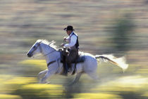NA, USA, Oregon, Seneca, Ponderosa Ranch Cowboy riding in sage  MR PR by Danita Delimont