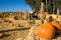 A farm selling pumpkins near San Rafael, California. by Danita Delimont