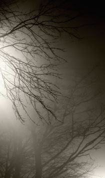Tree branches in fog by Susan Isakson